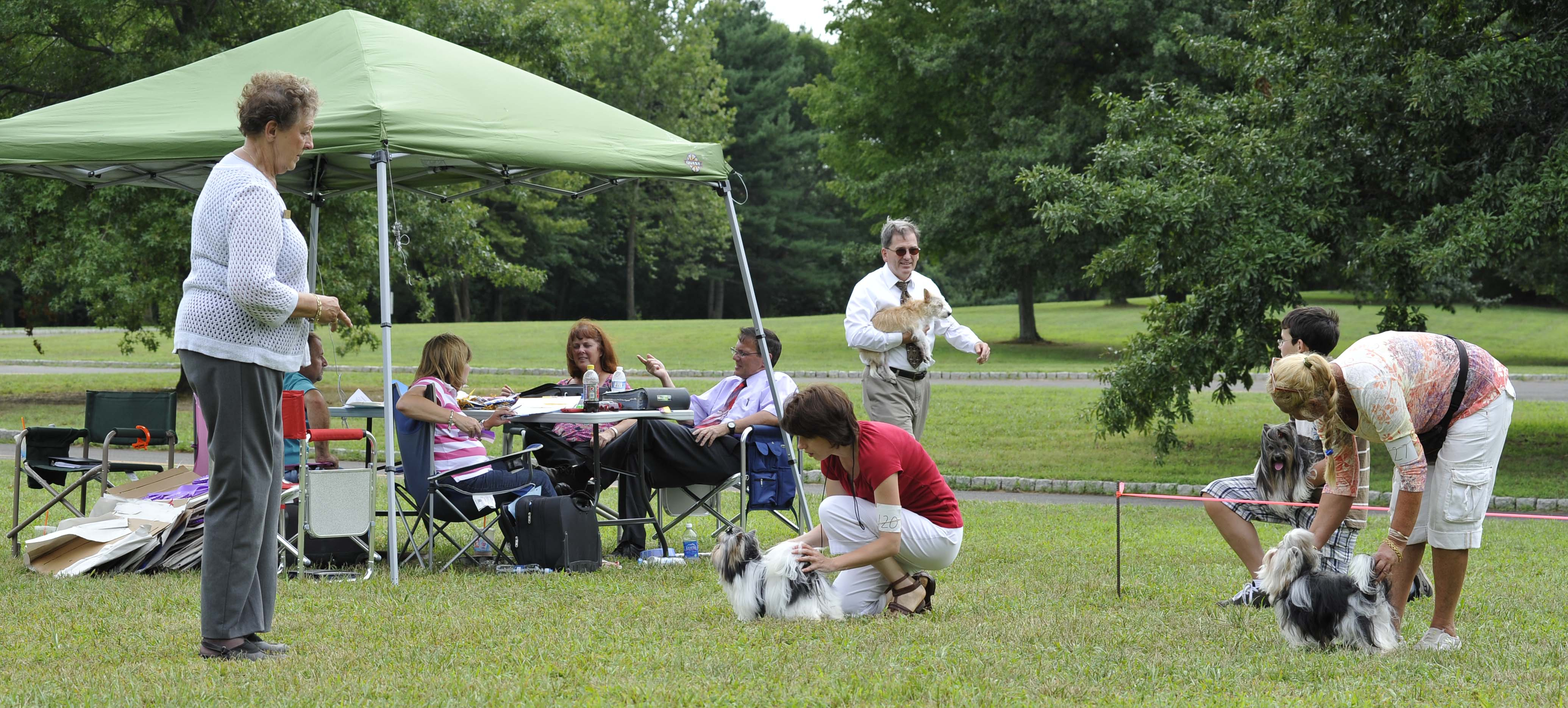 Ickc Dog Shows